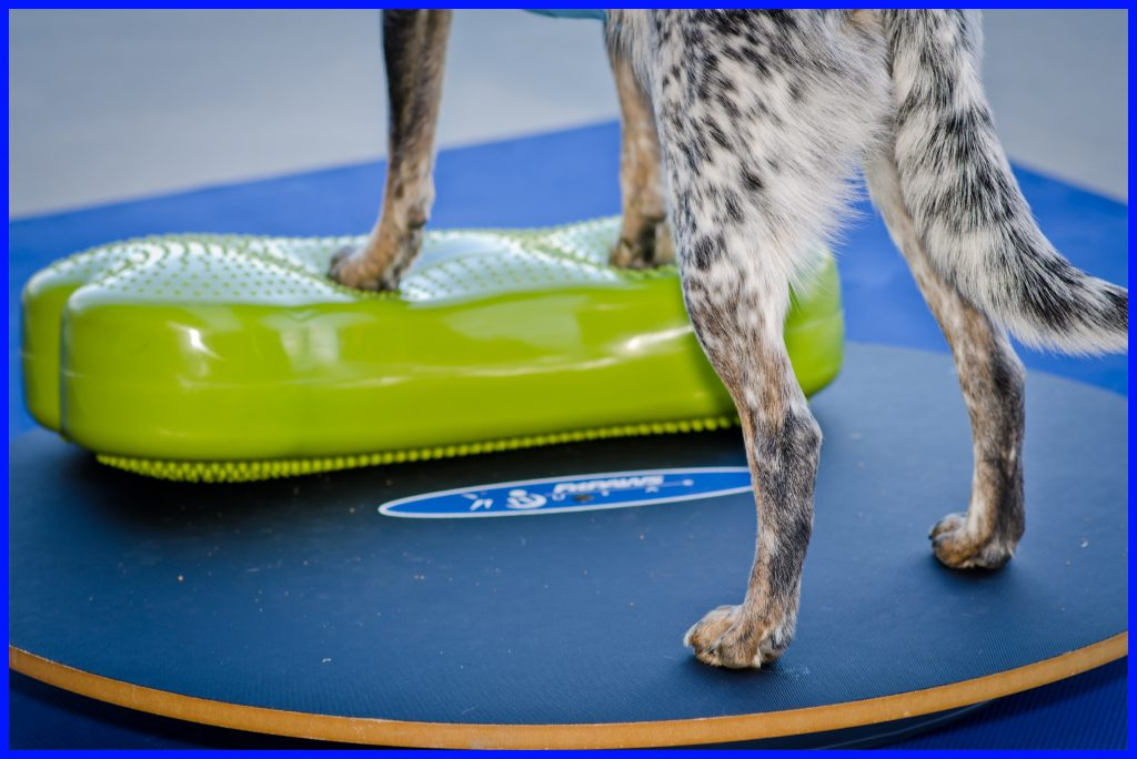 K9FITbone ™ CanineGym® - Fit For Core webshop