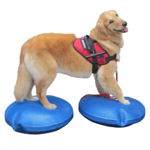 FitPAWS BALANCE SKIVE 55 - Fit For Core webshop