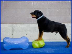 Udstillings Arbejds hunde og FitPAWS - Fit For Core Hundeudstyr