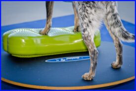 BALANCE BRÆT 90 cm WOBBLE BOARD FITPAWS - Fit For Core