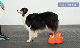 FitPAWS Træningsudstyr til Genoptræning - Fit For Core