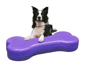 FitPAWS GIANT Hunde udstyr Fit For Core webshop 1349,00