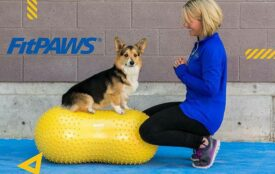 FitPAWS redskaberne til Core Genoptræning fra hvalp til voksen