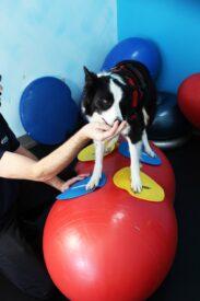 balance core og hunde træning redskaber