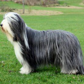 Arbejds hunde og FitPAWS - Fit For Core Hundeudstyr