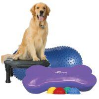 FitPAWS perfekt hundeudstyr til Hundeudstilling