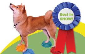 Hunde udstilling Best In Show lille hund FitPAWS udstyr til hundetræning