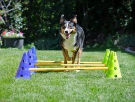 Hundeudstyr af topkvalitet