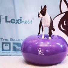 Balance core og hunde træning med din hund. Er de store muskelgrupper